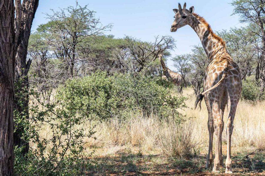 Inspectie Afrika Blog nummer Twee